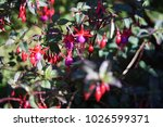 flowers bloom flora  | Shutterstock . vector #1026599371