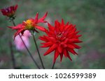 flowers bloom flora  | Shutterstock . vector #1026599389