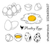 poultry eggs collection. fresh  ... | Shutterstock .eps vector #1026600637