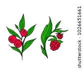 berries vector illustration....   Shutterstock .eps vector #1026651661