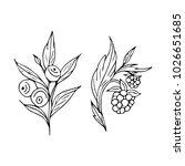 berries vector illustration....   Shutterstock .eps vector #1026651685