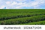 tea plantation in chiang rai ... | Shutterstock . vector #1026671434