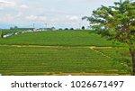 tea plantation in chiang rai ... | Shutterstock . vector #1026671497