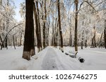 winter park with trees covered...   Shutterstock . vector #1026746275