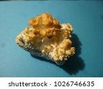 Small photo of Calcium acetate crystals