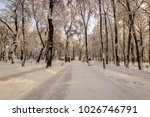 winter park with trees covered... | Shutterstock . vector #1026746791