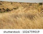 rural area fields india | Shutterstock . vector #1026759019
