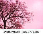 pink  single old and leafless...   Shutterstock . vector #1026771889