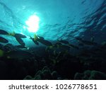 tropical fish and corals... | Shutterstock . vector #1026778651