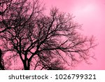 red  dry tree background...   Shutterstock . vector #1026799321