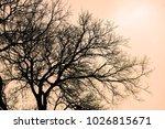 yellow dry tree  background...   Shutterstock . vector #1026815671