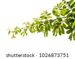 green leaf isolated on white... | Shutterstock . vector #1026873751