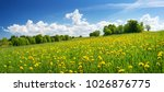 field with yellow dandelions... | Shutterstock . vector #1026876775