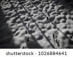snowy morning in a garden ... | Shutterstock . vector #1026884641