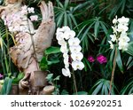 blooming flowers a background....   Shutterstock . vector #1026920251