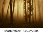 sunset colors in dark forest | Shutterstock . vector #102692885