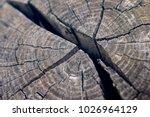 weathered torn wooden block in... | Shutterstock . vector #1026964129