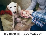Stock photo happy family at animal shelter choosing a dog for adoption 1027021399