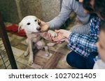 Stock photo happy family at animal shelter choosing a dog for adoption 1027021405