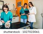 lionhead rabbit at veterinary. | Shutterstock . vector #1027023061