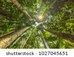 looking up at rainforest canopy. | Shutterstock . vector #1027045651