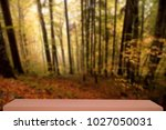colorful autumn forest defocus... | Shutterstock . vector #1027050031