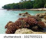 sealife of champagne bay ... | Shutterstock . vector #1027055221