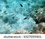 sealife of champagne bay ... | Shutterstock . vector #1027055401