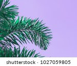 close up green palm leaves over ... | Shutterstock . vector #1027059805