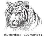 tiger head hand draw sketch... | Shutterstock .eps vector #1027084951