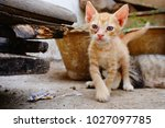 new cat baby has first time...   Shutterstock . vector #1027097785