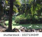 Harvesting Coconut Field....