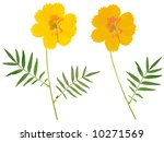 beautiful flower arrangement  ... | Shutterstock . vector #10271569