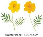 beautiful flower arrangement  ... | Shutterstock . vector #10271569