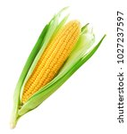 Small photo of Corn on the cob kernels close up shot Clipping Path