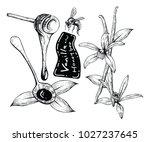 vanilla and honey bee with line ... | Shutterstock .eps vector #1027237645