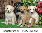 four cute pooch puppy | Shutterstock . vector #1027259551