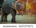 baby elephant plays hula hoop   Shutterstock . vector #1027274371