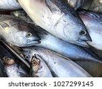 fresh saba fish in market.... | Shutterstock . vector #1027299145