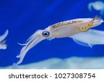 Squid To Swim In The Water