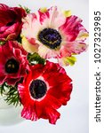 bouquet of bright anemones in a ... | Shutterstock . vector #1027323985