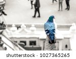 color popup on pigeon with high ... | Shutterstock . vector #1027365265