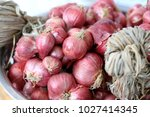 fresh shallots or onion bulb... | Shutterstock . vector #1027414345