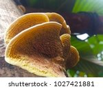 Mushroom Collected Grows In...