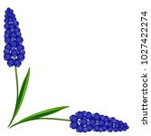 corner with muscari blue grape... | Shutterstock .eps vector #1027422274