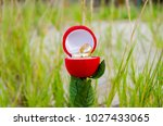 alliance box rose shaped ... | Shutterstock . vector #1027433065