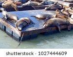 Pier 39 Seals Lying In The Sun...