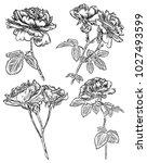 tattoo concept rose flowers set.... | Shutterstock . vector #1027493599