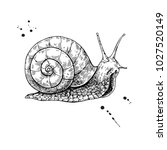 snail vector drawing. hand...