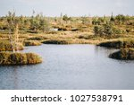 summer landscape. swamp  marsh  ... | Shutterstock . vector #1027538791
